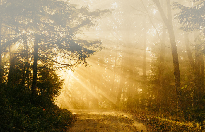 beautiful energy roadmap, heal chronic fatigue