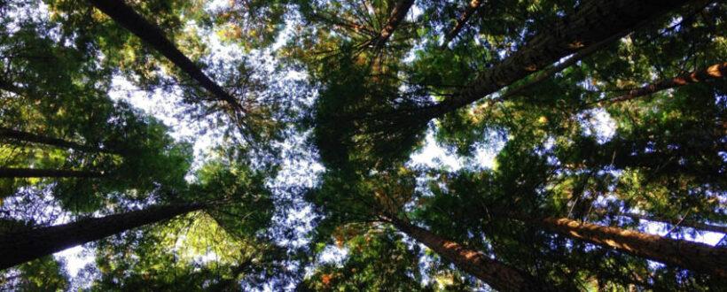 karyn shanks md liftoff blog healing functional medicine