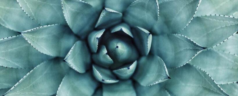 karyn shanks md nine domains of healing intuition healing the mind holistic healing